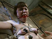 Seda hog-tied video 35