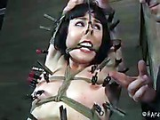 Coral Aorta Hard Tied clip 5