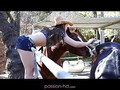 Dani Daniels Passion HD video 22